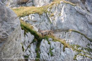 Passo degli scalini, AlpiGiulieOccidentali2015_D